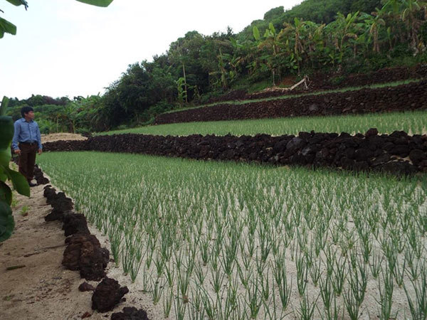 Ly Son Islands' garlic gets GI recognition