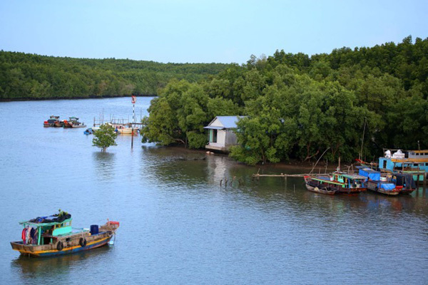 Development won't hurt Can Gio Biosphere Reserve, says former official