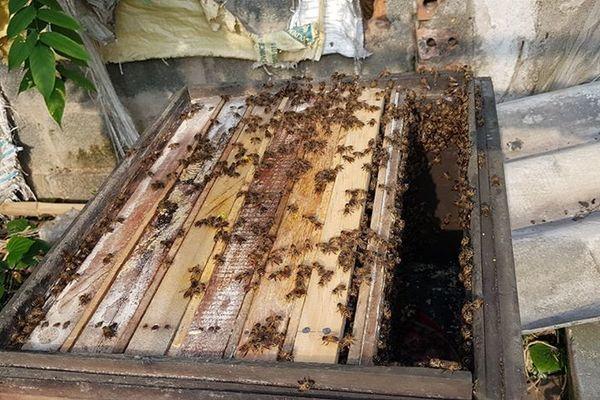 Đổi đời, làm giàu nhờ cần mẫn nuôi ong lấy mật