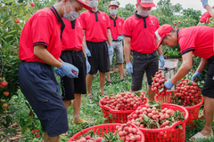 VN businesses struggle to stop export decline