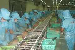 Exporters worried as catfish exports to major markets drop