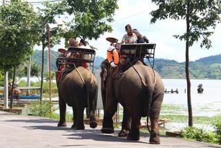 Cưỡi voi, 3 mẹ con du khách bị rớt xuống đất trọng thương