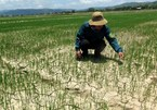 Nearly 55,000 ha of crops in Vietnam's central region hit by drought
