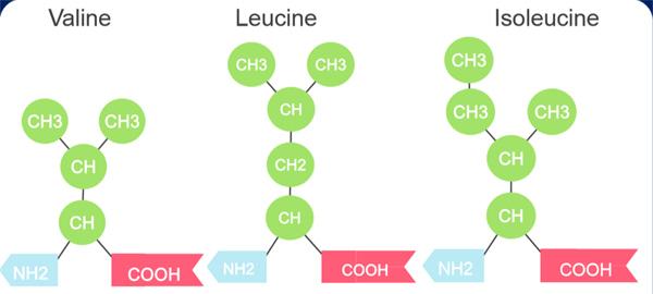 Ứng dụng axit amin trong điều trị dinh dưỡng