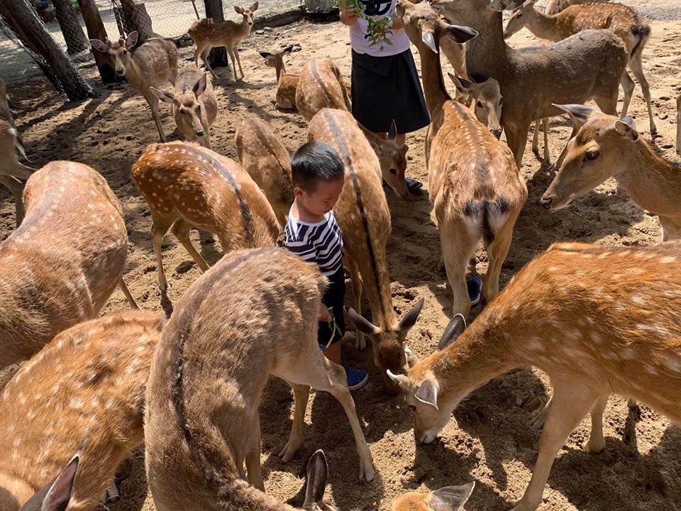 Gia đình Hà Nội đi xuyên Việt 30 ngày, chi tiêu 80 triệu đồng