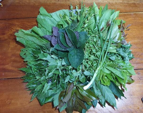Leaf salad,wild leaves salad