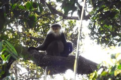 Hundreds of rare primate species found in Vietnam