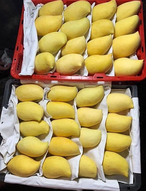 Sự thật xuất xứ xoài mỏ quả vàng rực tràn về chợ Hà Nội