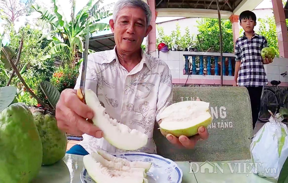 Đồng Tháp: Loại ổi lạ cho trái siêu to, mỗi trái nặng hơn 1kg là chuyện thường