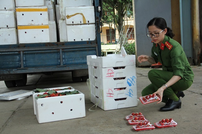 3,5 tấn dâu nghi của Trung Quốc 'bay' vào Đà Lạt