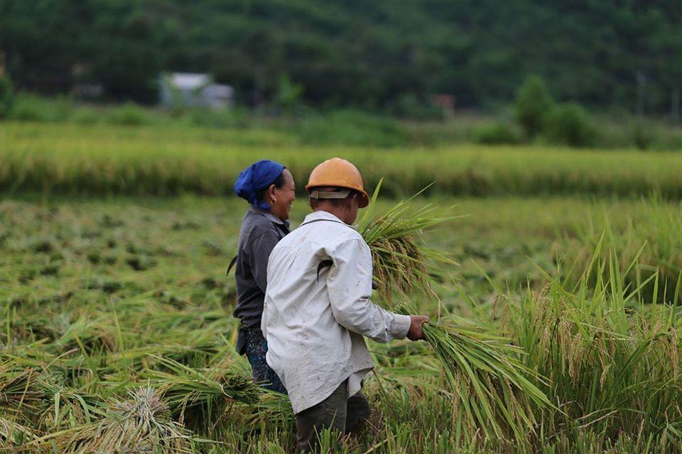 Những phong trào XĐGN thiết thực của nông dân Cam Lộ