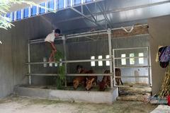 """Lời giải nào cho """"biệt thự"""" 236 triệu của bò ở Nghệ An"""