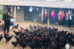 Lào Cai chi hơn 26 tỷ nhân rộng 20 mô hình giảm nghèo
