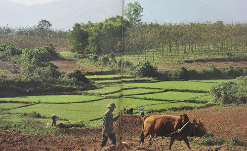 Dự án Ngân hàng bò góp phần giúp Mường Ảng thoát nghèo