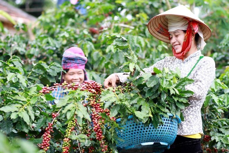 Sơn La: Giảm nghèo bền vững, nâng cao thu nhập nhờ kinh tế HTX