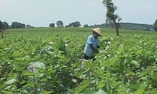 Lâm Hà: Phong trào nông dân sản xuất, kinh doanh giỏi góp phần thay đổi diện mạo