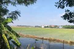 Tiếp tục miễn thuế sử dụng đất nông nghiệp: Khuyến khích sản xuất, nâng cao đời sống người nông dân