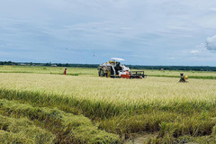 Will technical barriers imposed by the Philippines create difficulties for Vietnam's rice exports?