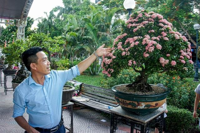 Mãn nhãn với cây hoa trang đột biến sắc hồng giá gần nửa tỷ