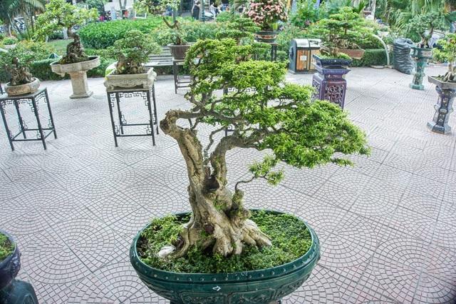 Mục sở thị vườn cây cảnh thu nhỏ có giá hàng tỷ đồng giữa lòng Thủ đô