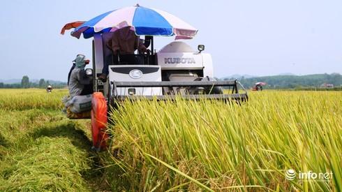 Nghệ An tôn vinh gương nông dân sản xuất kinh doanh giỏi giai đoạn 2016 - 2020