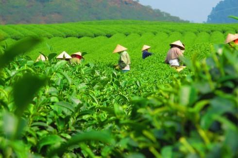 Phú Thọ: Vốn tín dụng ưu đãi hỗ trợ kịp thời gần 12 nghìn hộ mới thoát nghèo