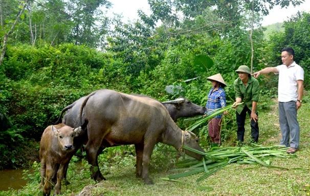 Tuyên Quang: Rà soát chính xác nguyên nhân nghèo để có giải pháp phù hợp