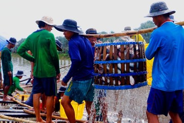 Vietnam's catfish industry experiencing tough days, no improvement expected this year