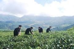 Cao Bằng: Tăng giá trị sản phẩm nông sản qua mô hình liên kết theo chuỗi