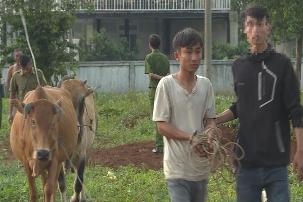 Gã trai trộm bò, thuê xe chở từ Khánh Hòa lên Đắk Lắk bán