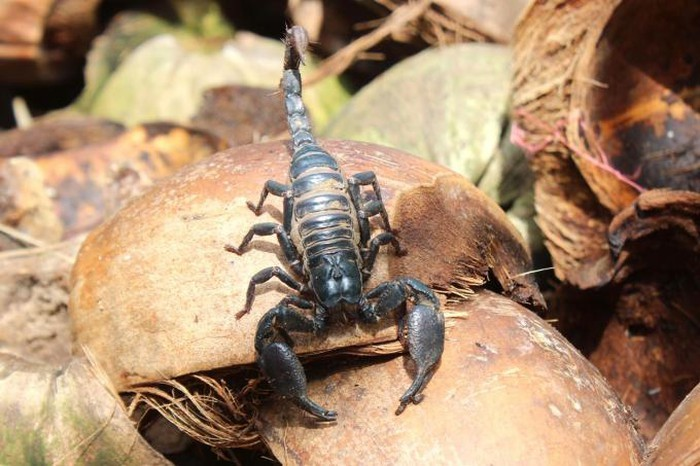 Nuôi loài côn trùng sắp tuyệt chủng, mỗi ngày đếm 5 triệu đút túi