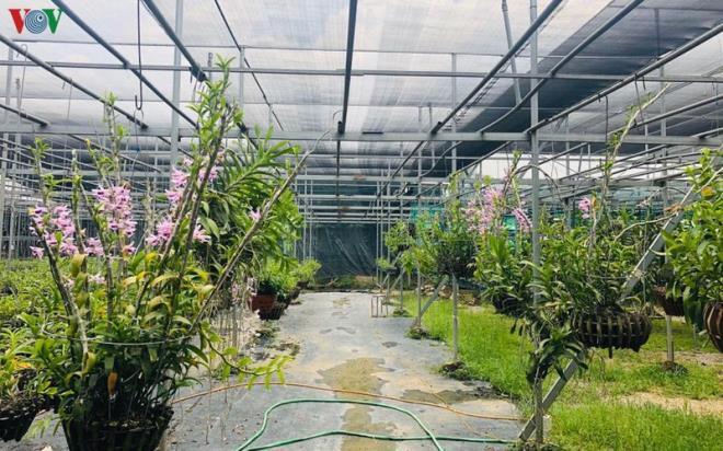 Cơn sốt lan đột biến tiền tỷ làm 'nóng' vựa hoa Đông La, Hà Nội