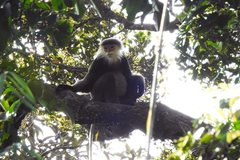 'Treasury' of biodiversity discovered in Kon Tum