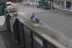 Lái ô tô đuổi chó dữ đang tấn công 1 phụ nữ