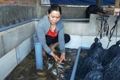 Phú Yên: Có điểm tựa, chị em tự tin nỗ lực vươn lên thoát nghèo