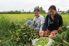 Ấn tượng xóa đói, giảm nghèo bền vững ở Long Thắng
