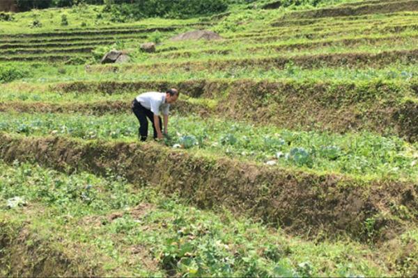 Thay đổi nhận thức, hộ nghèo đua nhau thoát nghèo nhờ trồng rau trái vụ