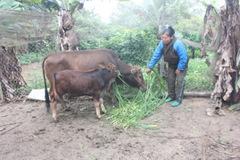 """""""Đòn bẩy"""" giúp hàng nghìn lượt nông dân giảm nghèo bền vững"""