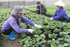 Dân Kỳ Phú có thu nhập thường xuyên nhờ kinh tế vườn