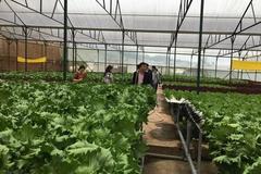 Sản xuất nông sản hữu cơ, thu nhập tăng thêm 200 triệu đồng/ha/năm