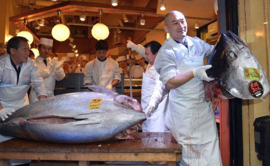 Sự thật đằng sau miếng sushi cá ngừ đắt giá