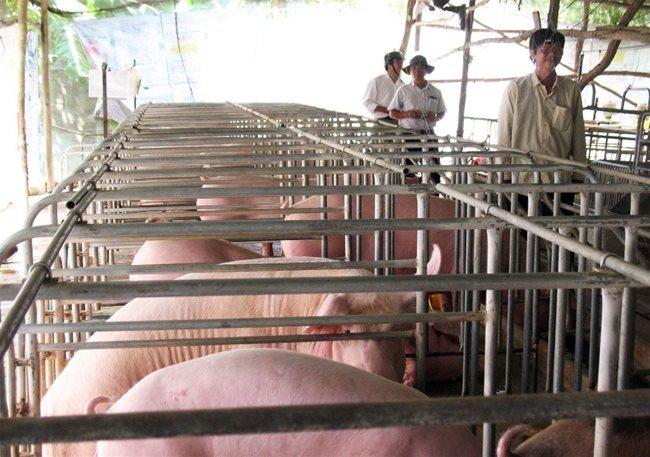 vietnam livestock