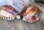 Man saves endangered turtles from being eaten