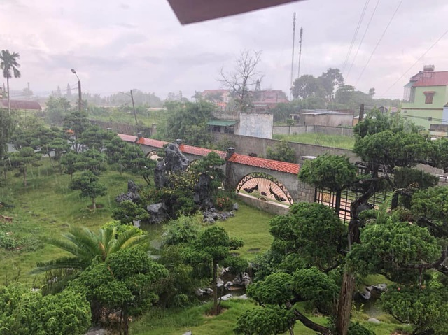 Vườn tùng bạc tỷ rộng 1500m2 trong khuôn viên biệt thự ở Buôn Mê Thuột