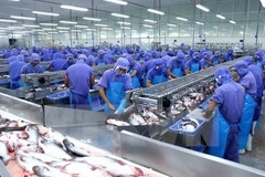 VN tra fish companies see profits slump in pandemic