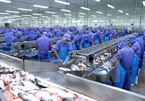 VN tra fish companies see profits slump in pandemic