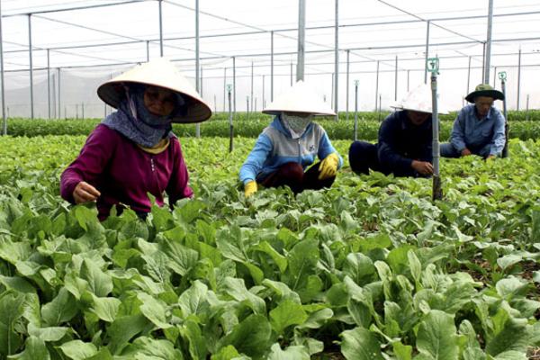 Đất Đỏ tạo 'cần câu cơm', giúp dân tự lực vươn lên thoát nghèo