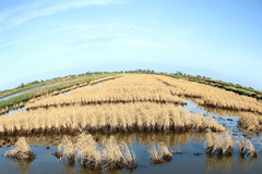 Mekong Delta must be protected from natural disasters