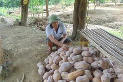Policies need to be timely and reasonable to stimulate demand in Vietnam