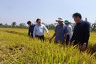 Long An đưa máy bay không người lái vào sản xuất lúa